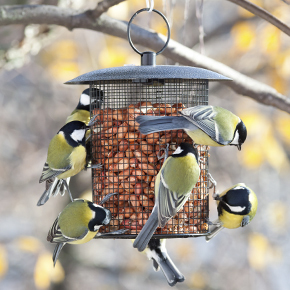 Bird Feed & Feeders