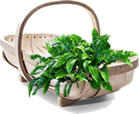 Your Shopping Basket - Garden Bargains