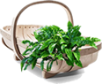 Your Garden Bargains Shopping Basket